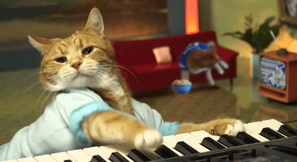 Bento, the keyboard cat