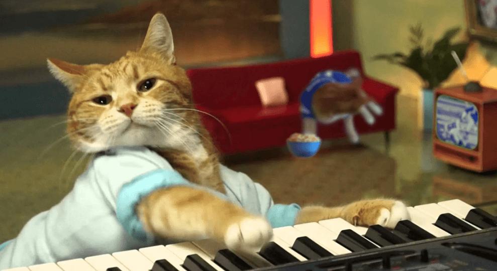 Bento, the keyboard cat