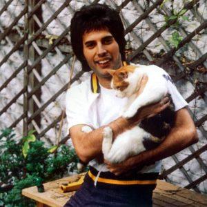Cats Freddie Mercury