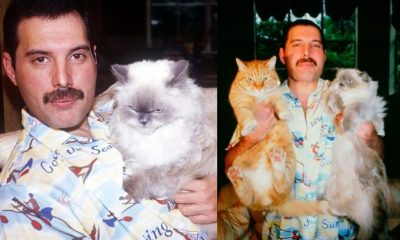 Freddie Mercury with cats