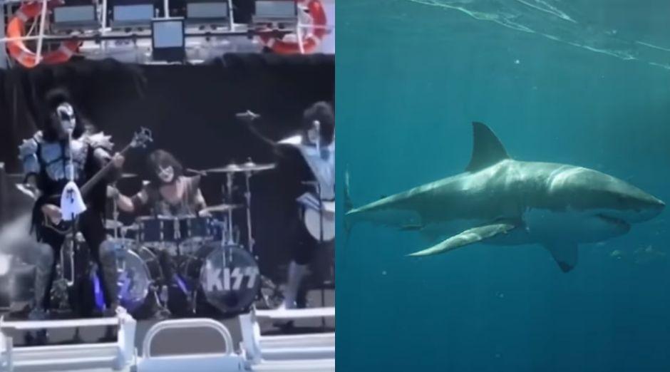 Kiss White sharks