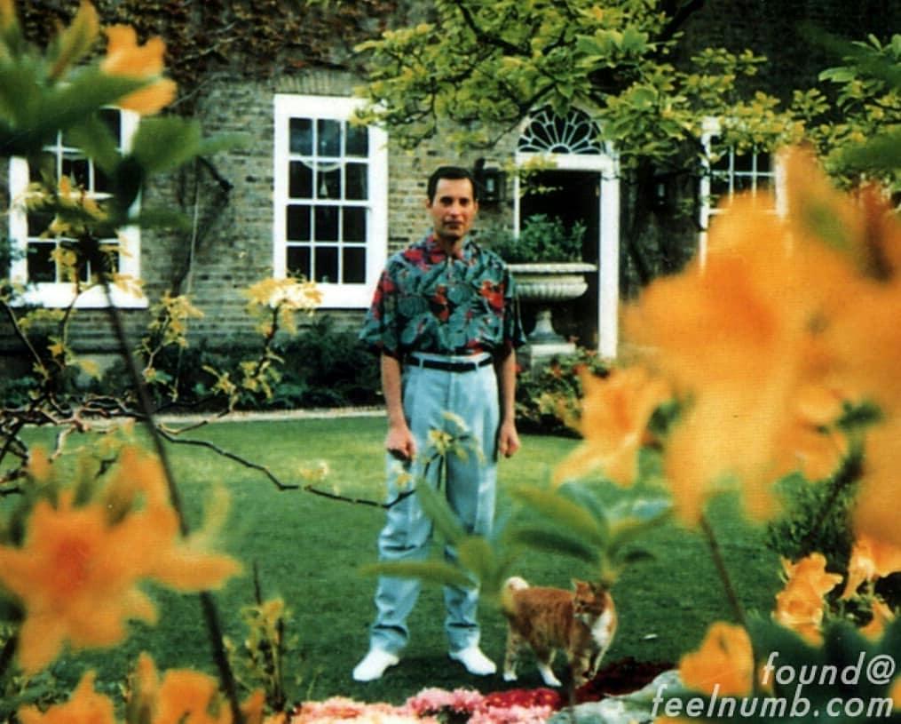 Freddie Mercury Final Photo