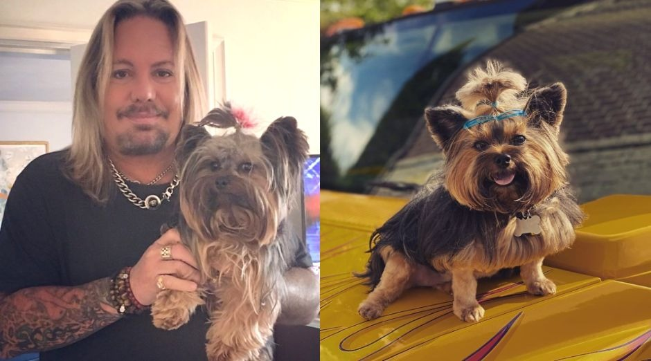 Vince Neil dog