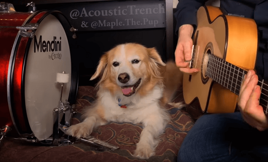 Watch amazing dog performs AC/DC's Back In Black with his dad