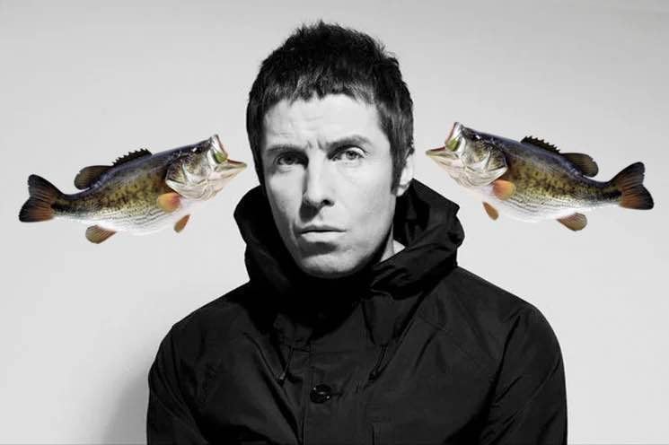 Liam Gallagher and fishes