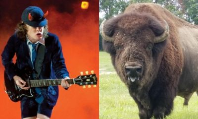 ACDC Bison